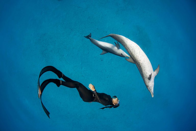 Hanli Prinsloo swimming with dolphins